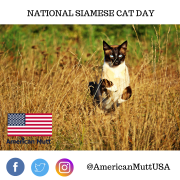 national siamese cat day